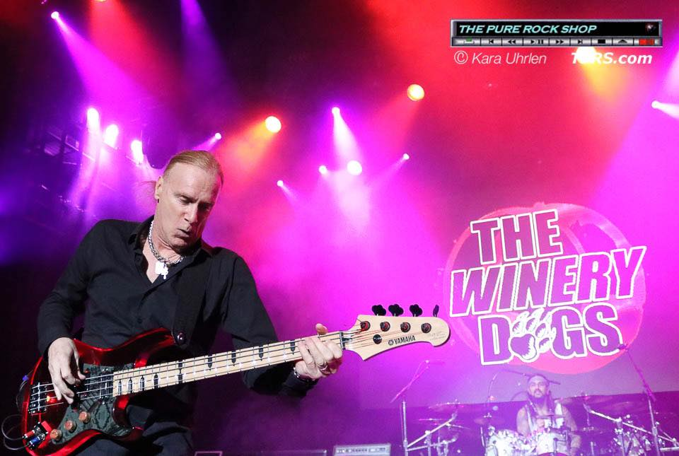 winery-dogs-4